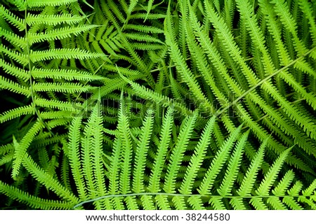 dynamic fern composition, vibrant green background texture - stock photo