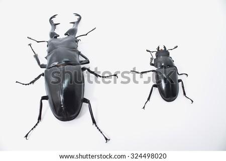 Dynastinae man isolated white background - stock photo