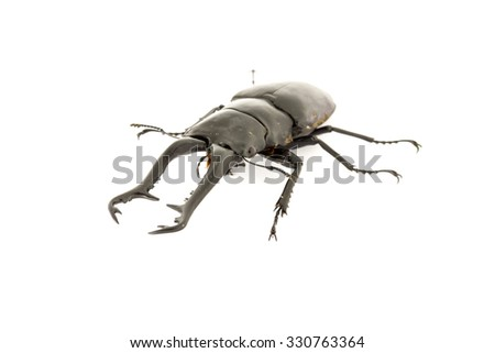Dynastinae on white background. - stock photo