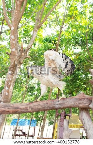 eagle bird on the tree - stock photo