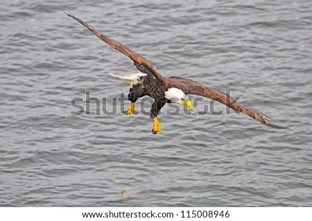 Eagle. British Columbia. Canada.