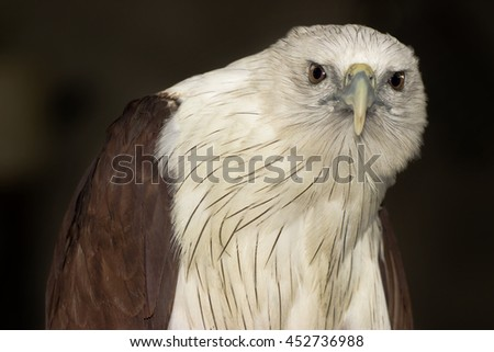 Eagle close up image - stock photo