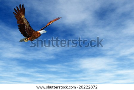 Eagle flying on a background of the dark blue sky