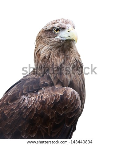 Eagle head close up isolated on white background