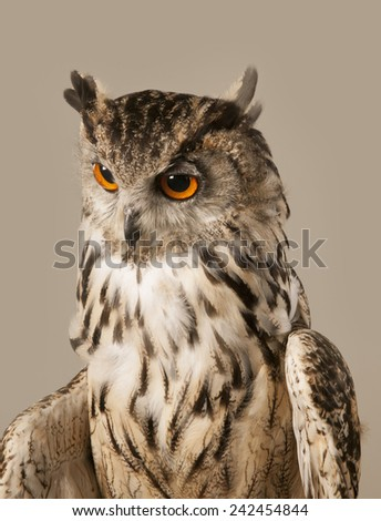 EAGLE OWL 3.  A well lit studio shot of an eagle owl looking down and to the left - stock photo