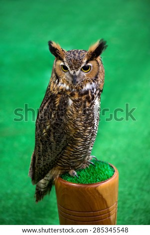 Eagle Owl/An eagle owl. - stock photo