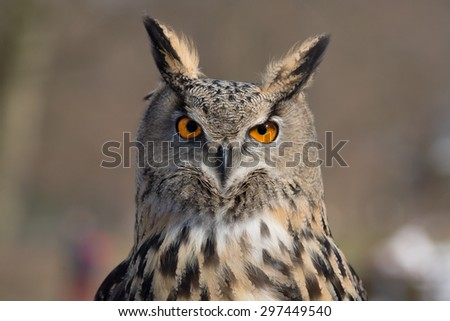 Eagle Owl An eagle owl in wildlife on portrait - stock photo