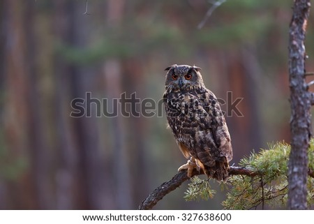 eagle owl in the forest - stock photo