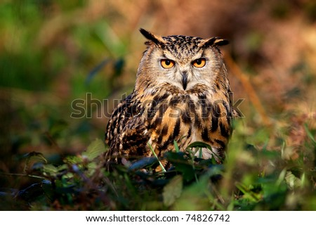 Eagle owl in the woods - stock photo