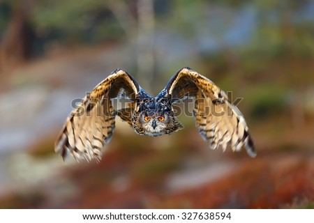 eagle owl is flying to us - stock photo