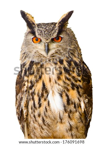 Eagle Owl, isolated on white background - stock photo