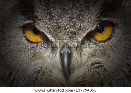 eagle owl looking from dark very close up - stock photo