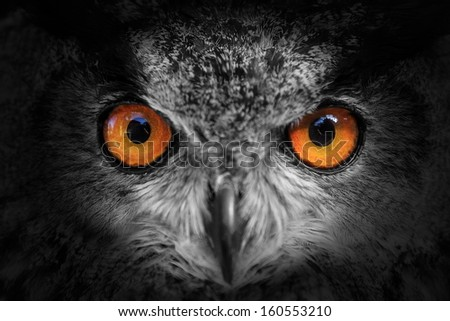 eagle owl looking out of the darkness close up, black and white - stock photo