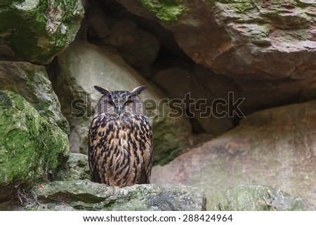 eagle owl sitting front of rock hole - stock photo