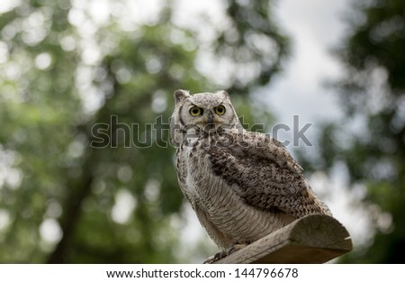 Eagle owl sitting on the perch - stock photo