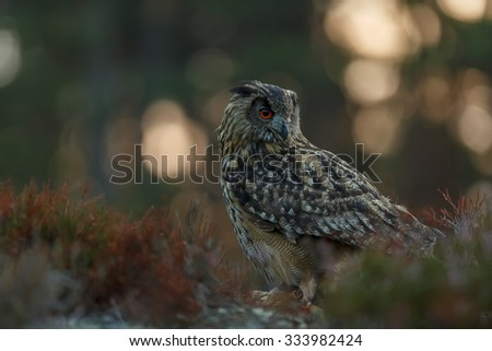 eagle owl with sunrise - stock photo