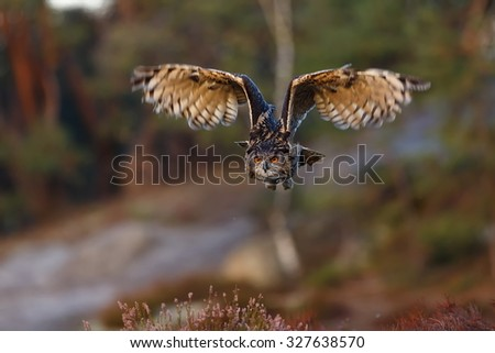 eagle owl with wide open wings - stock photo