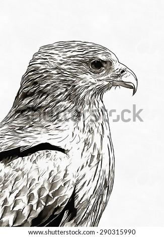 Eagle pencil sketch - stock photo