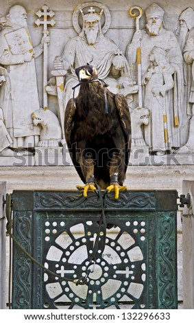 Eagle posing in Buda Hill, Budapest, Hungary