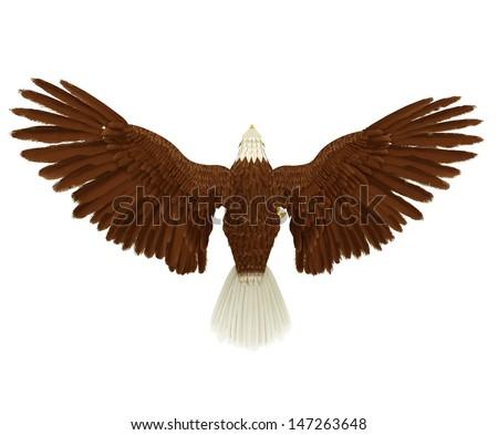 eagle rear bird eye - stock photo