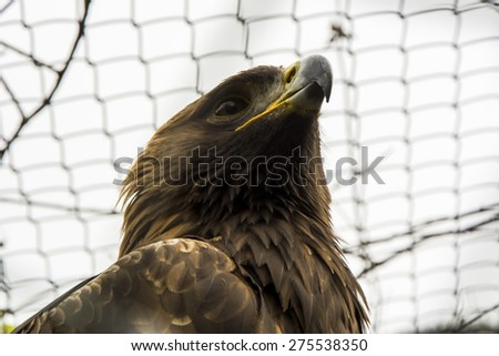 Eagle's eyes - stock photo
