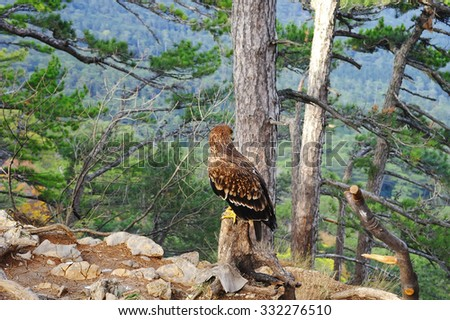 Eagle sitting on a tree stump in the forest rut - stock photo
