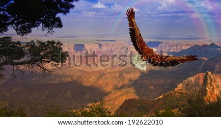 Eagle takes flight over Grand Canyon USA - stock photo