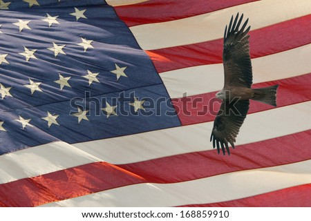 Eagle while flying on star and stripes american US flag - stock photo