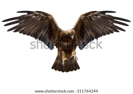 eagle with spread wings, isolated over white - stock photo