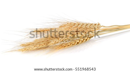Ear of barley on white background