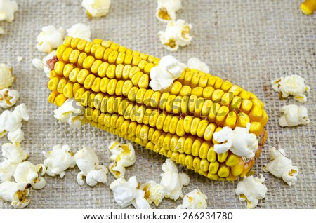 Ear of corn and popcorns scaterred on a vintage tablecloth - stock photo