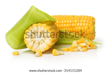 Ear of corn isolated on a white background. Fresh corncob. - stock photo