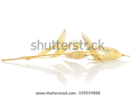 Ear of oats isolated on white background - stock photo