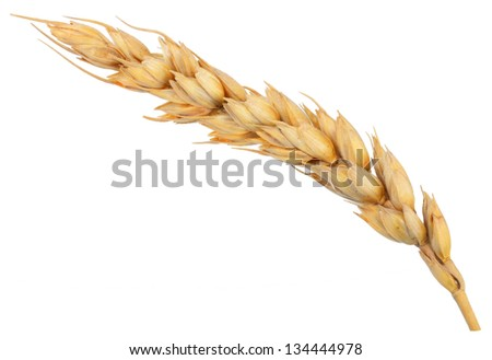 Ear of wheat. Macro - stock photo