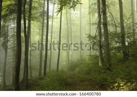 Early autumn forest in the dense fog. - stock photo