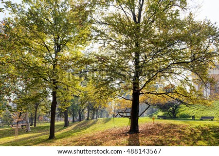 Early autumn in the park with view on tree and his leaves, sunny day