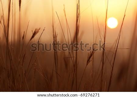 Early morning - stock photo