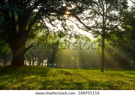 Early morning at a garden with sunrays - stock photo
