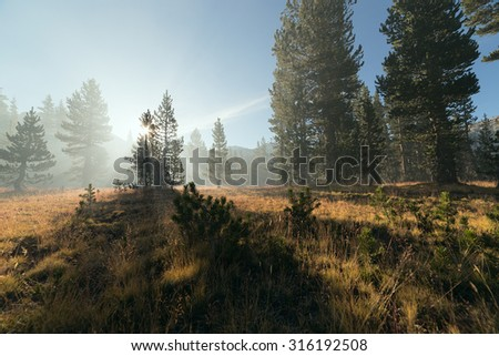 Early morning at fringe of mountain pine forest with sun beams passing through the mist next to Cathedral lake in Yosemite National Park. High key image. - stock photo
