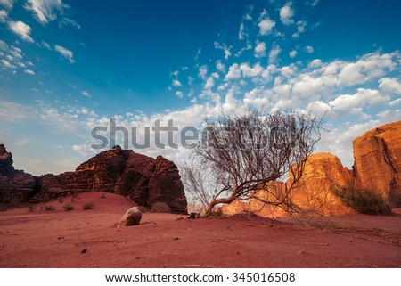 Early morning at the Wadi Rum desert. Jordan - stock photo
