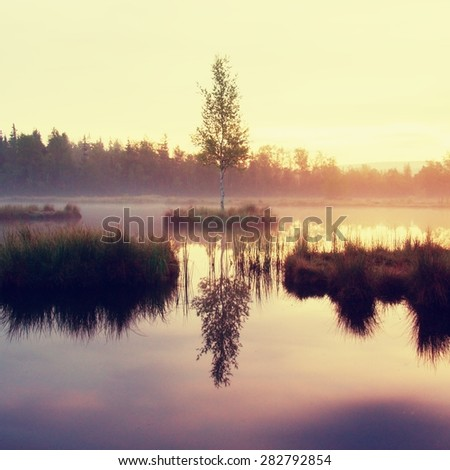 Early morning autumn lake in dreamy forest, young tree on island in middle. Colorful herbs and grass on islands, heavy clouds in sky. - stock photo