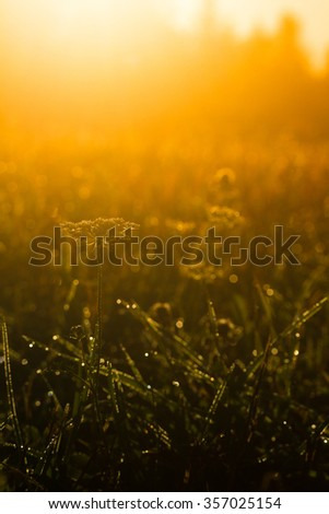 early morning dew on plants in spring meadow, back light ,sun light, - stock photo