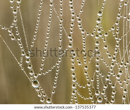 Early Morning Dewdrops On Spider Web