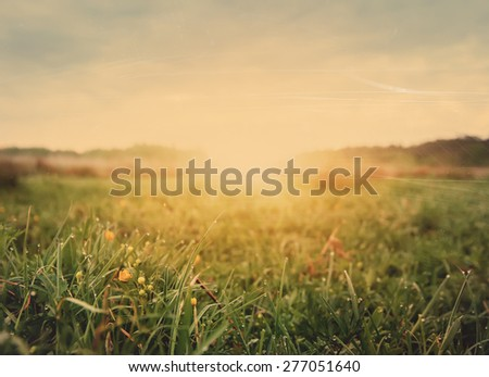 early morning field of flowers,natural vintage summer background - stock photo