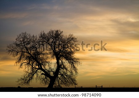 Early morning first light twilight country landscape with a lone silhouette of a tree. - stock photo