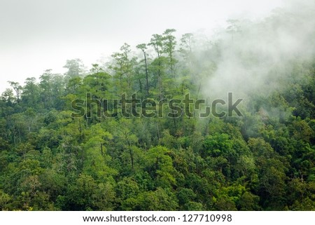 Early morning fog in pine tropical forest, Thailand - stock photo