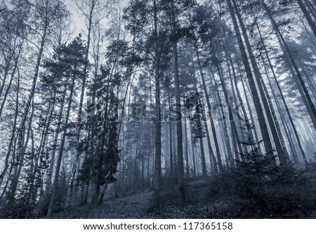 Early morning in a dark forest with fog and tall trees - stock photo