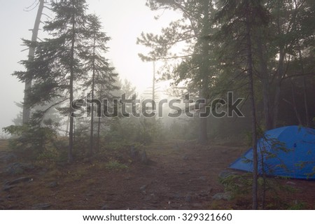 Early morning in forest of Killarney Park - stock photo