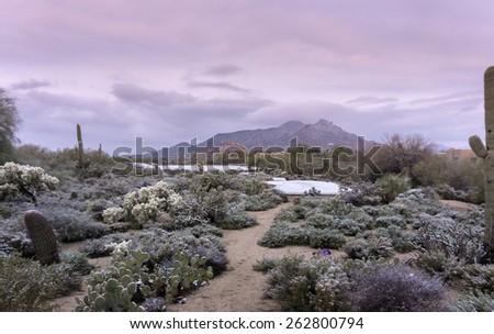 Early morning landscape scene of unusual desert winter snow scene in Scottsdale,Az,USA - stock photo