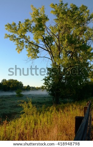 Early Morning Light Bathes a Large Tree with a Foggy Rice Creek in the Distance, Arden Hills, Minnesota - stock photo